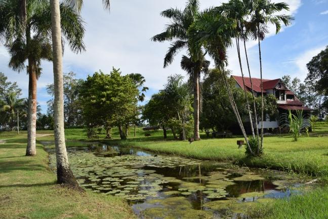 Suriname Gerardine 12