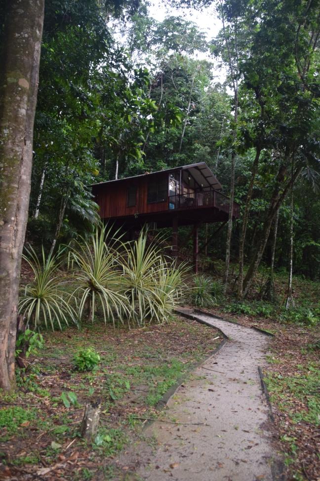 Suriname Gerardine 15