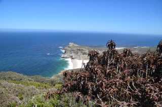 cape good hope
